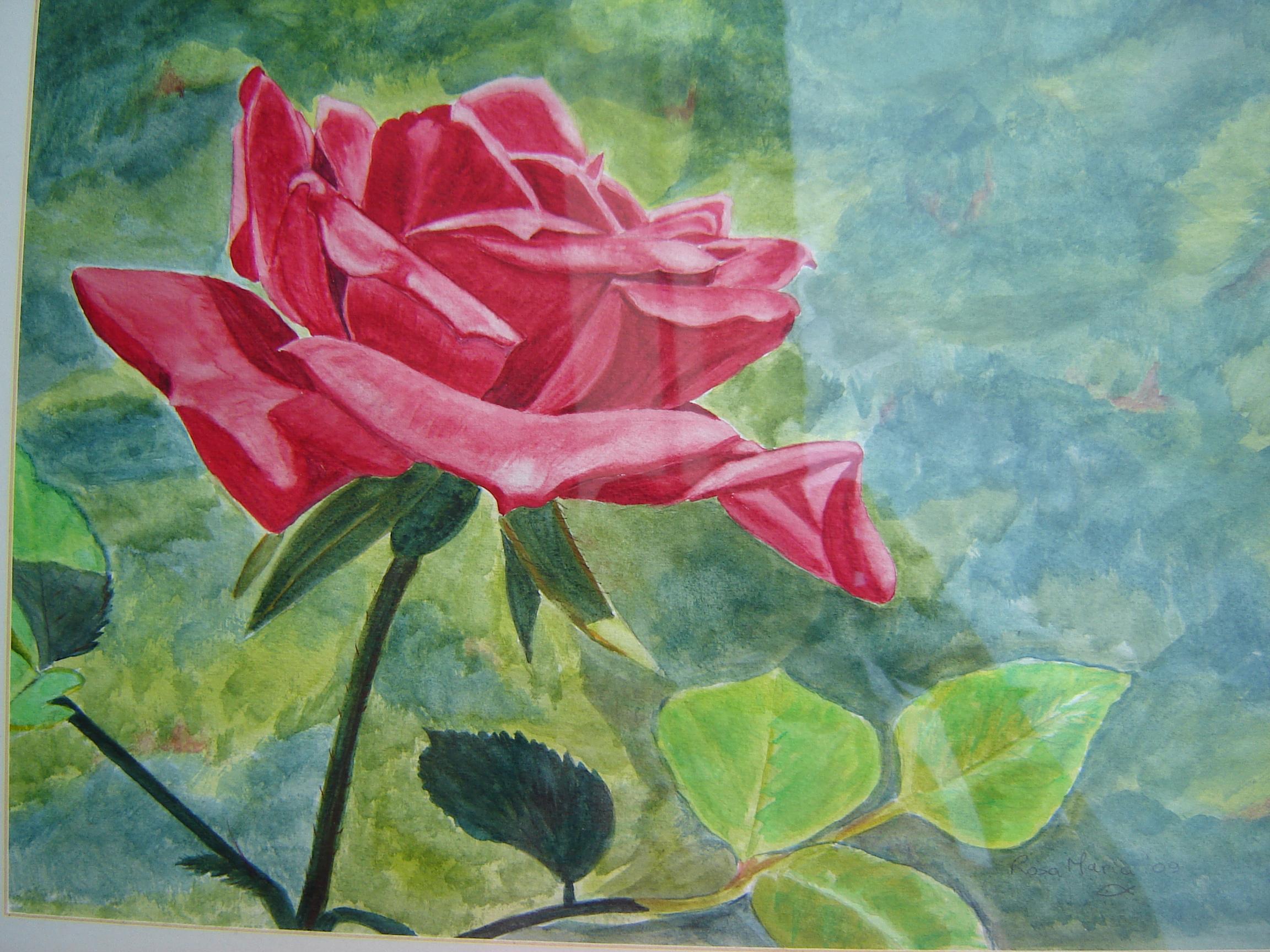 Rose in garden (Rosa vermelha no jardim