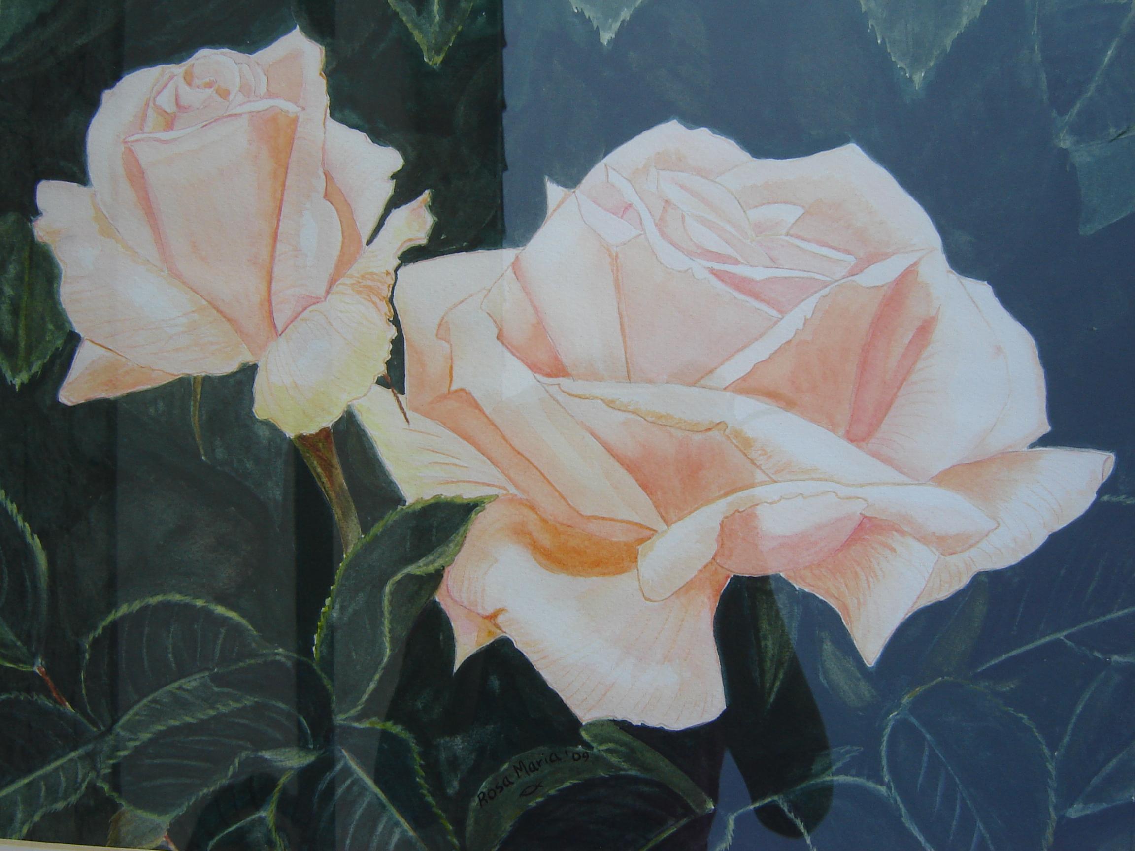 Tea Rose (Rosa chá)
