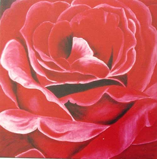 Big Red Rose (Rosa grande Encarnada)