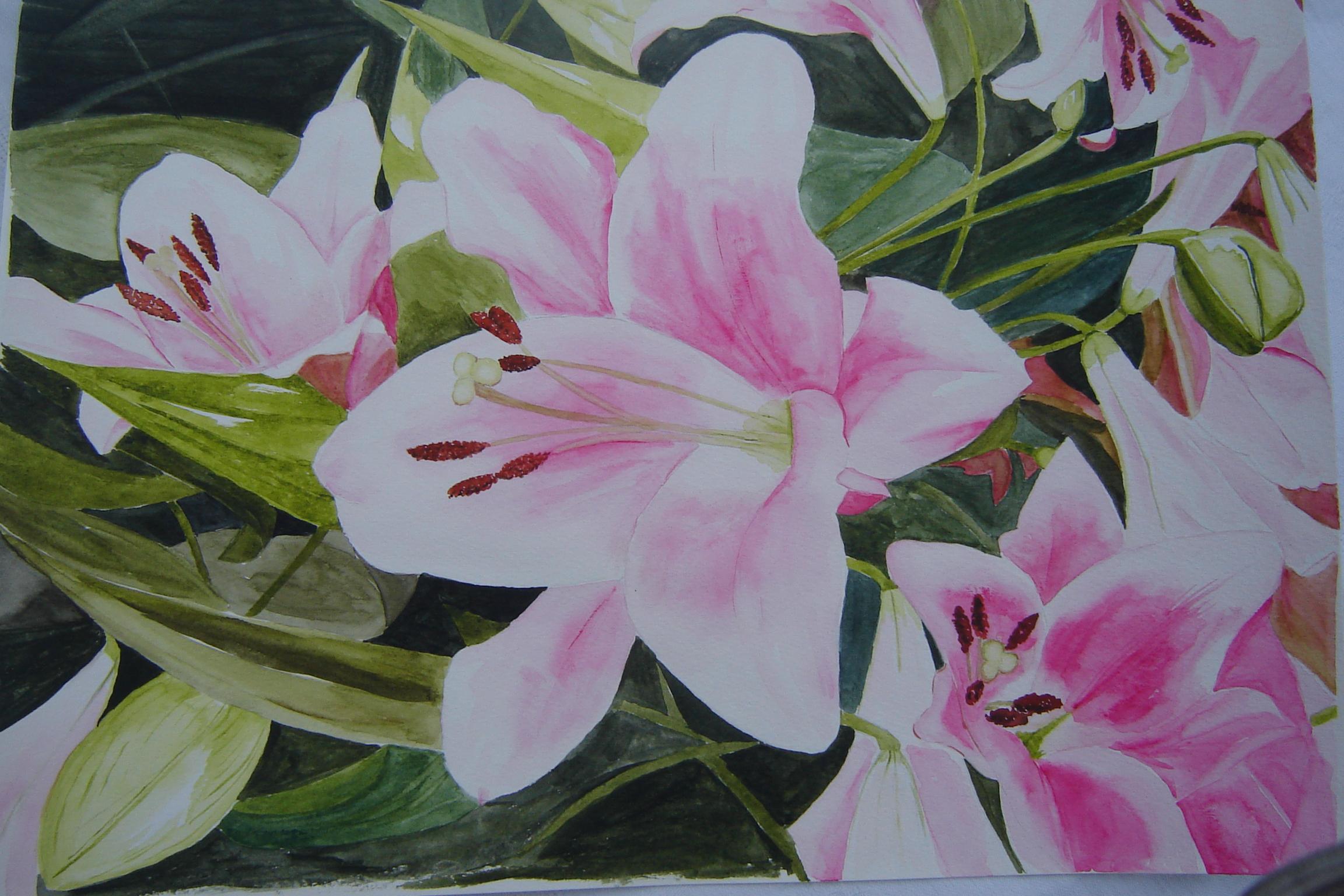 Lillies ( Croas Reais Rosa)